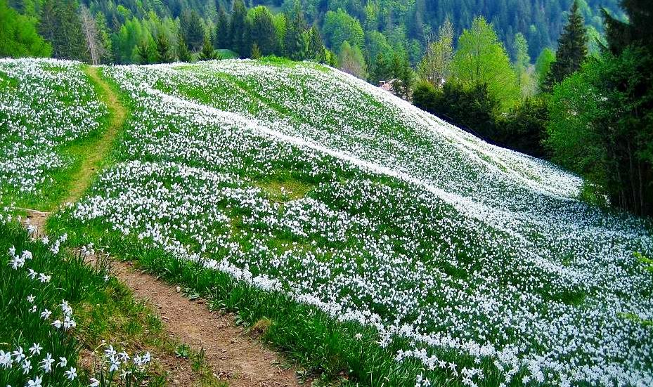 """""""Tavasz van! Gyönyörű!"""" Április - a vers ünnepe"""